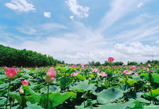 cam nhan bai tho canh ngay he - Cảm nhận bài thơ Cảnh ngày hè